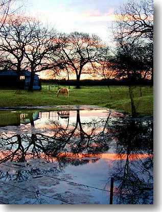 RanchStudio dawn